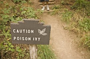 """Path through the woods marked by a sign that says """"Caution Poison Ivy"""" in front of a clump of ivy"""
